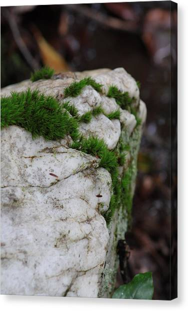 Forest Rock With Moss Canvas Print by Pamela Smith