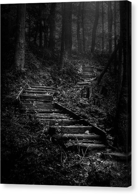 Wood Canvas Print - Forest Stairs by Scott Norris