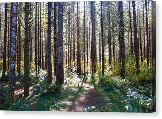Forest Stroll Canvas Print