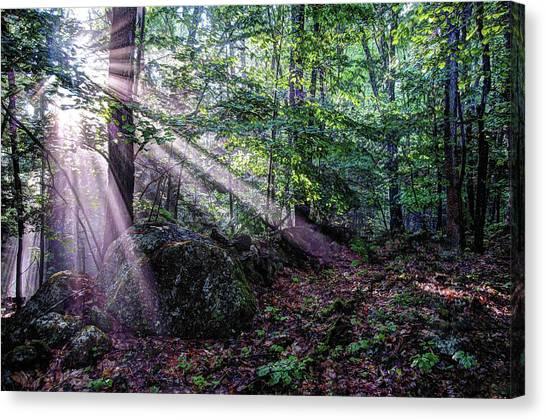 Forest Sunbeams Canvas Print