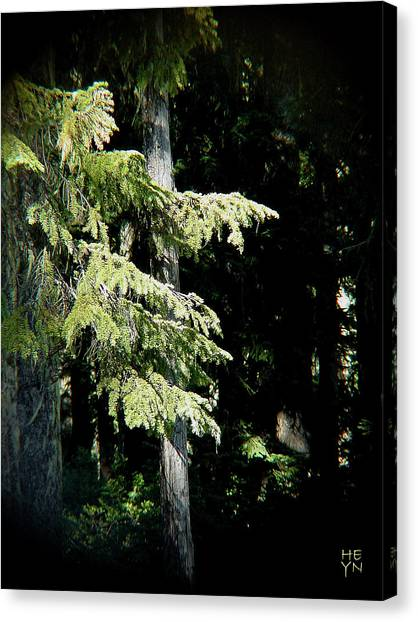 Forest Sunlight - 1 Canvas Print