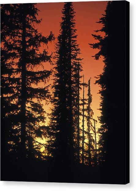 Forest Sunset Canvas Print by Leland D Howard