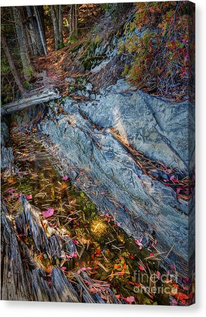 Forest Tidal Pool In Granite, Harpswell, Maine  -100436-100438 Canvas Print