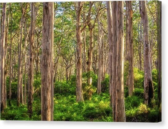 Forest Twilight, Boranup Forest Canvas Print