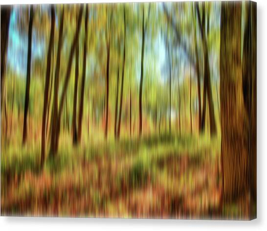 Forest Vision Canvas Print
