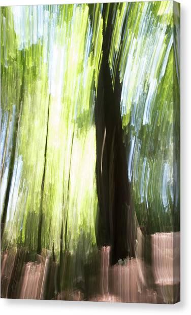 Forest Walk #2 Canvas Print by Linda Bickerton-Ross
