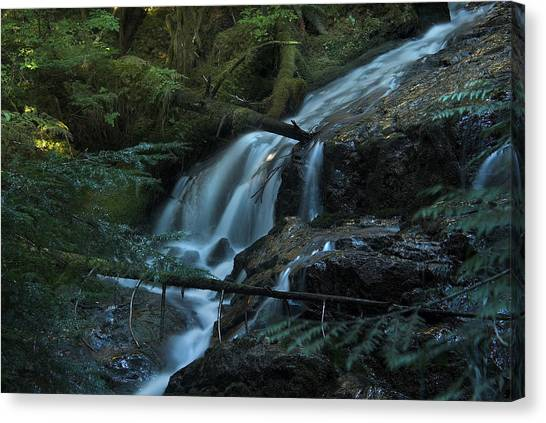 Forest Waterfall. Canvas Print