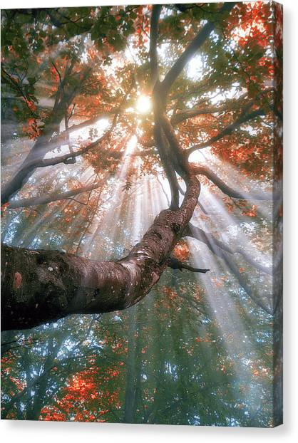 Forest With Fog And Sun Rays Canvas Print