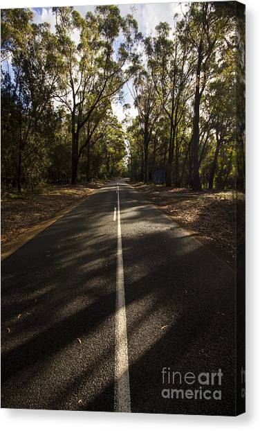 Canvas Print featuring the photograph Forestry Road Landscape by Jorgo Photography - Wall Art Gallery