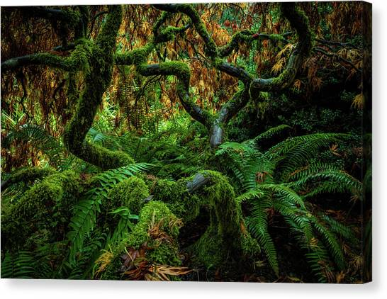 Maple Leaf Art Canvas Print - Forever Green by Edgars Erglis