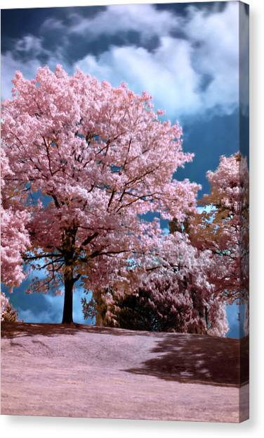 Forever Spring Canvas Print