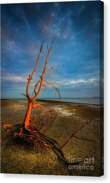 Ocean Sunrises Canvas Print - Fork In The Marsh by Marvin Spates