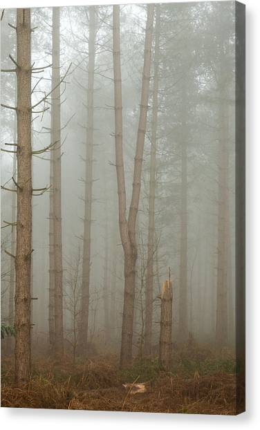 Early Spring Canvas Print - Forked And Broken by Chris Dale
