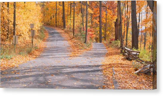 Fallen Leaf Canvas Print - Forked Road In A Forest, Vermont, Usa by Panoramic Images