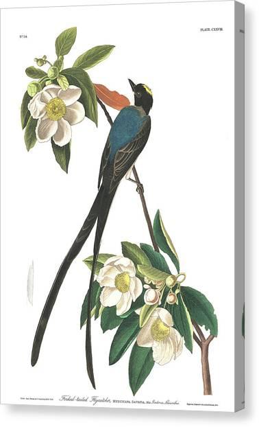 Flycatchers Canvas Print - Forked-tailed Flycatcher by John James Audubon