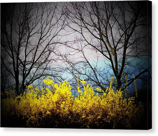 Forsythia By The Mountains Canvas Print by Joyce Kimble Smith