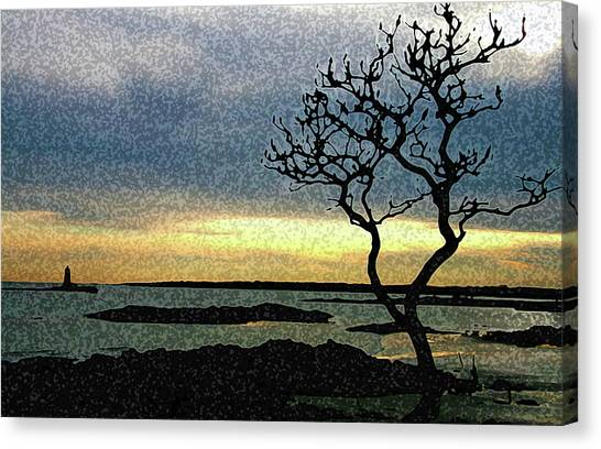 Fort Foster Tree Canvas Print