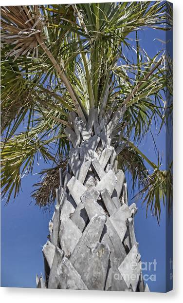 Fortified Foundation Palm Canvas Print