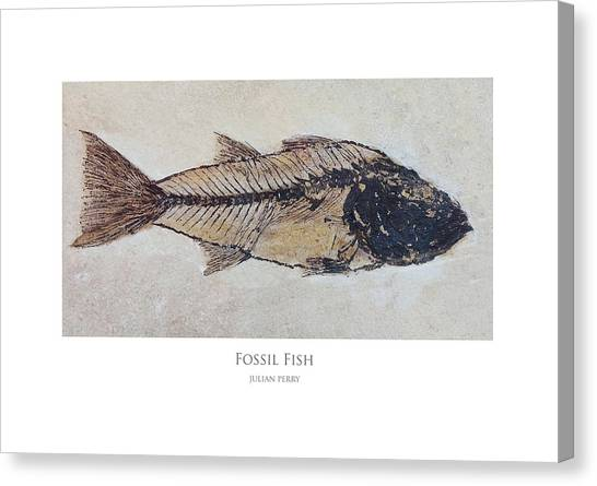 Fossil Fish Canvas Print