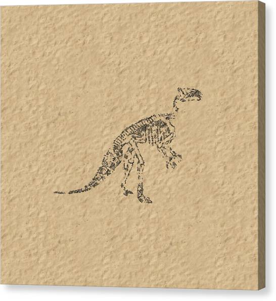 Fossils Of A Dinosaur Canvas Print