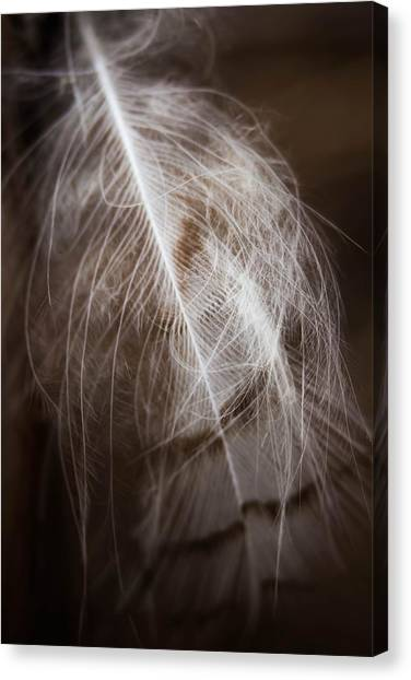 Found Feather Canvas Print