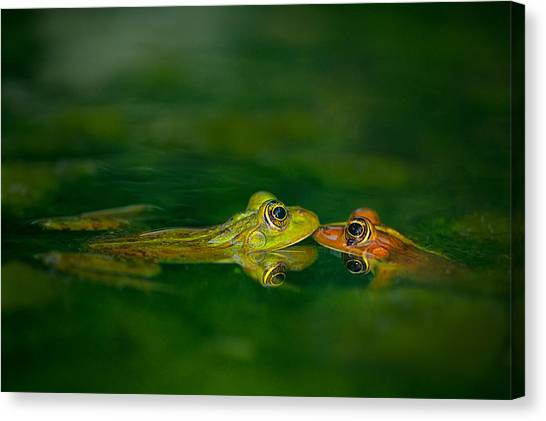 Kiss Canvas Print - Four Eye Meeting by Tomer Yaffe