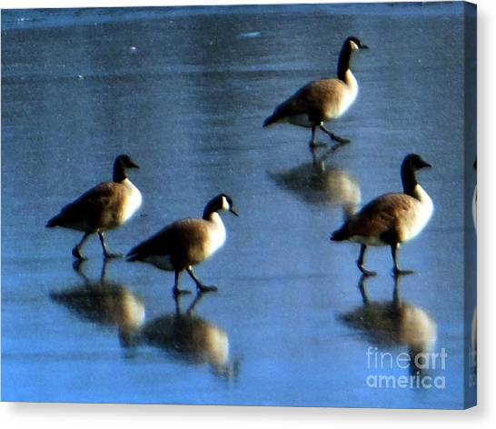Four Geese Walking On Ice Canvas Print