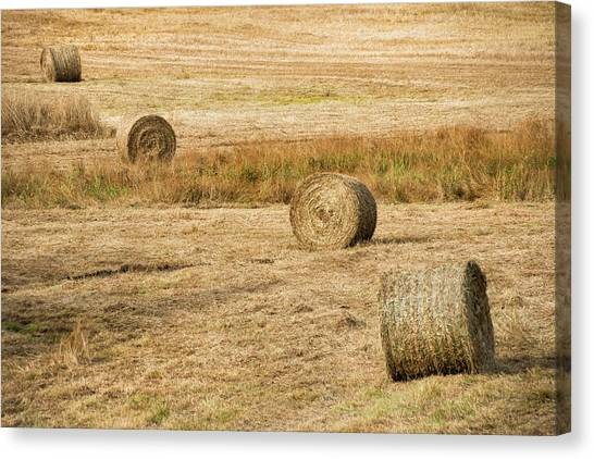 Four Hay Balls -  Canvas Print