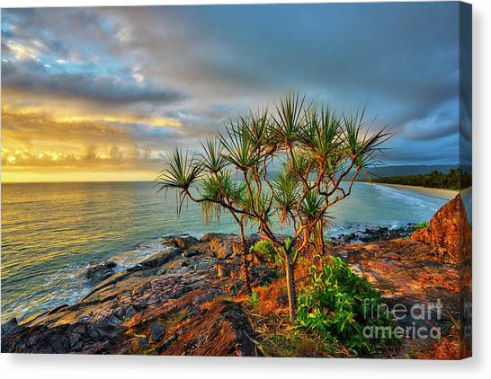 Daintree Rainforest Canvas Print - Four Mile Beach by Dennis Harding