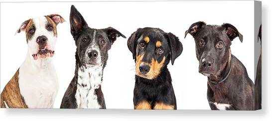 Rottweilers Canvas Print - Four Mixed Breed Dogs Closeup by Susan Schmitz