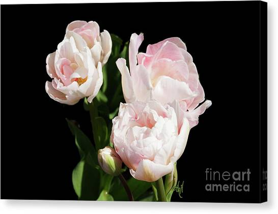 Four Pink Tulips And A Bud On Black Canvas Print