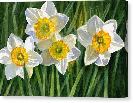 Daffodils Canvas Print - Four Small Daffodils by Sharon Freeman