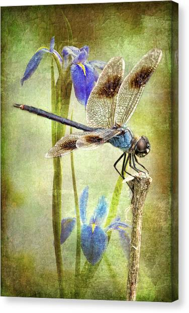 Four Spotted Pennant And Louisiana Irises Canvas Print