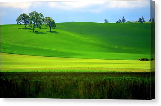 Four Trees On Livermore Road Canvas Print