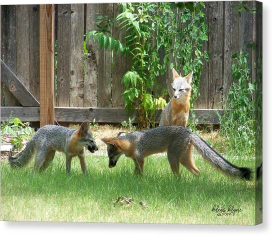 Canvas Print featuring the photograph Fox Family by Deleas Kilgore