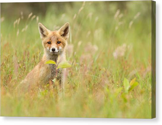 Carnivore Canvas Print - Fox Kit In The Filed by Roeselien Raimond