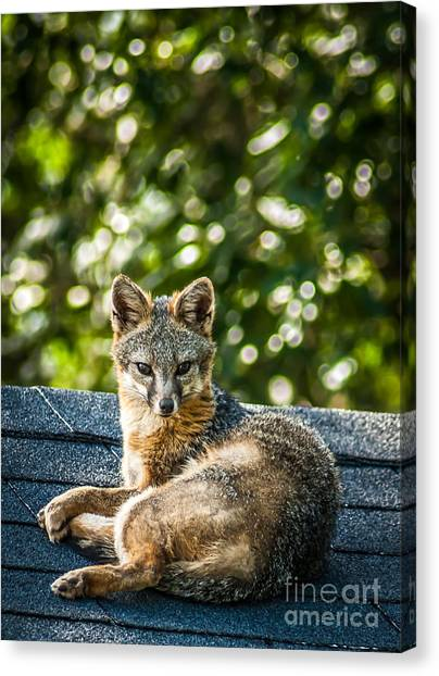Fox On Roof Canvas Print