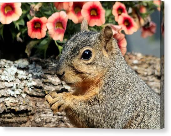 Fox Squirrel Portrait Canvas Print
