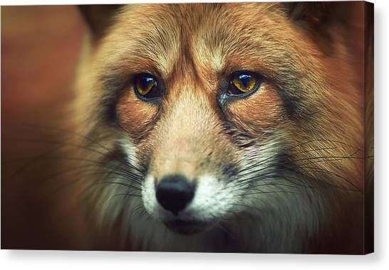 Nose Canvas Print - Fox by Zoltan Toth