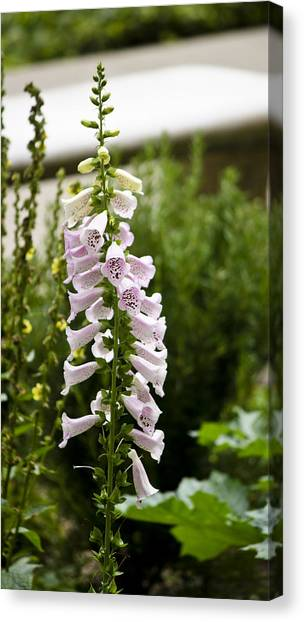 J Paul Getty Canvas Print - Foxglove At The Getty by Teresa Mucha