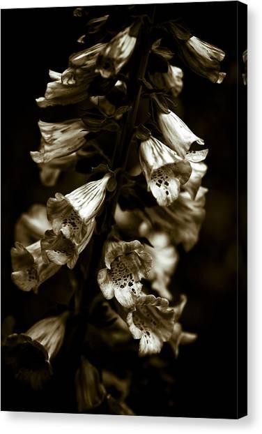 Foxglove Flowers Canvas Print by Frank Tschakert