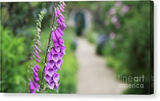 Foxglove Flowers Canvas Print - Foxglove In An English Garden by Tim Gainey