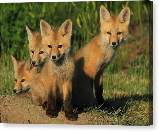 Foxy Four Canvas Print