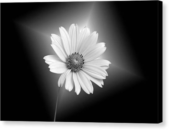 Fragile Beauty Canvas Print by Maria Dryfhout