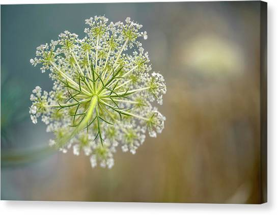 Bugs Canvas Print - Fragile Dill Umbels On Summer Meadow by Nailia Schwarz