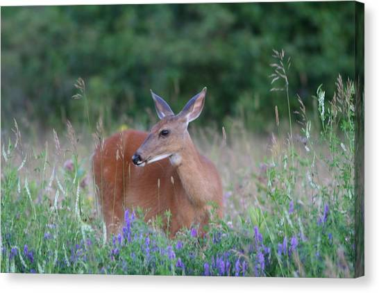 Framed By Flowers Canvas Print