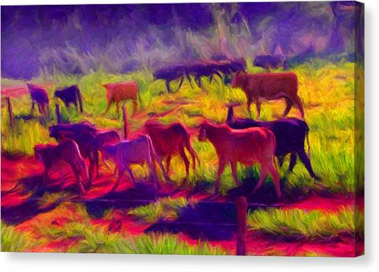Franca Cattle 1 Canvas Print