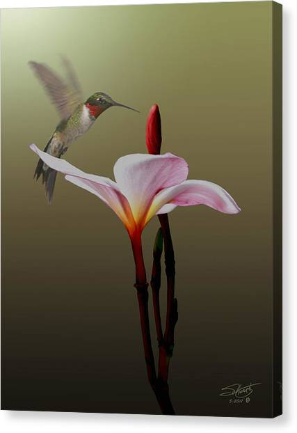Frangipani Flower And Hummingbird Canvas Print
