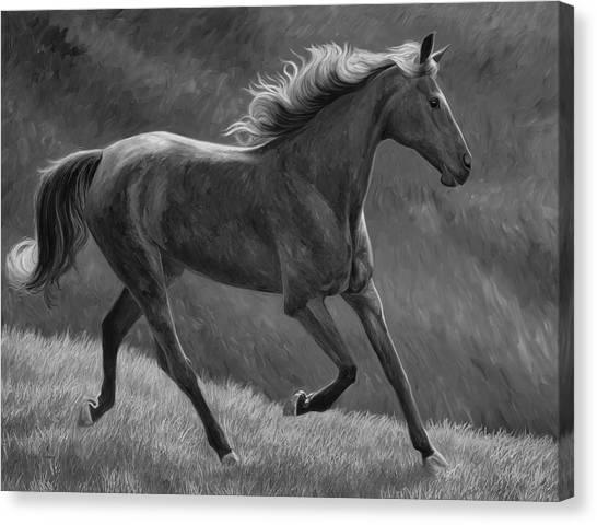 White Horse Canvas Print - Free - Black And White by Lucie Bilodeau