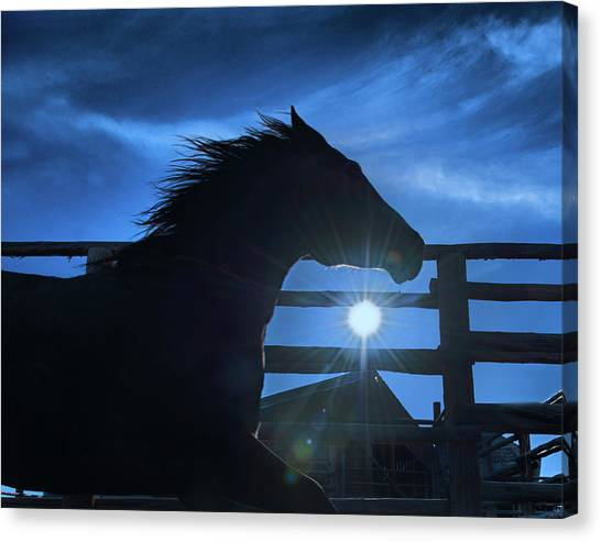 Canvas Print - Free Spirit Horse by Shawn Hamilton